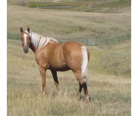 Silver & Gold Horse Shampoo