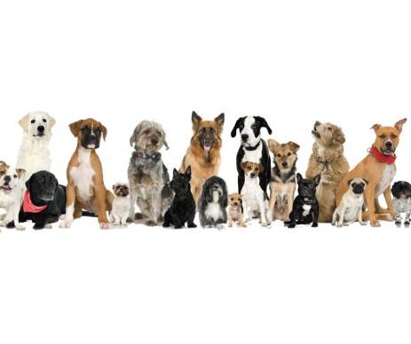 All Breeds Coat Enhancing Dog Supplement