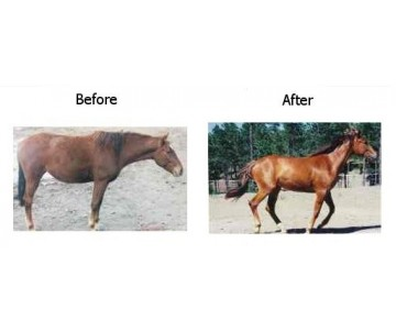 Red-D-Vinity Horse Supplement.  Equine Coat Enhancers for Chestnut, Red, and Pintos and Paints.